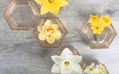Origin Of the Daffodil