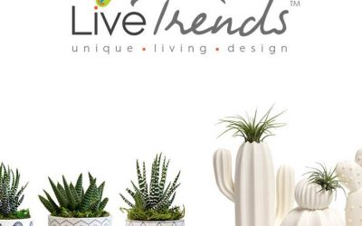 Introducing LIVE TRENDS!