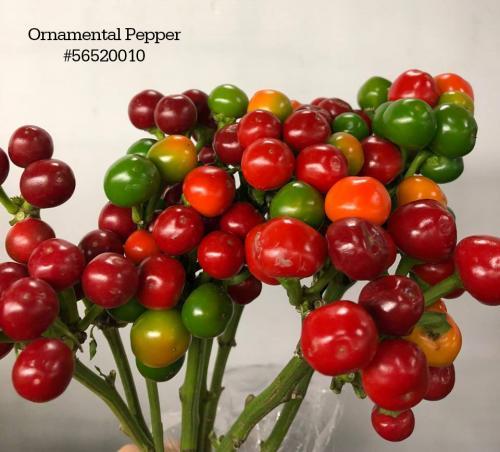 Ornamental Pepper#56520010
