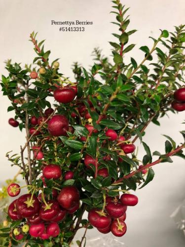 Pernettya Berries#51413313