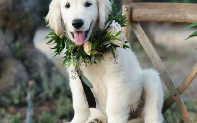 Flower Collars