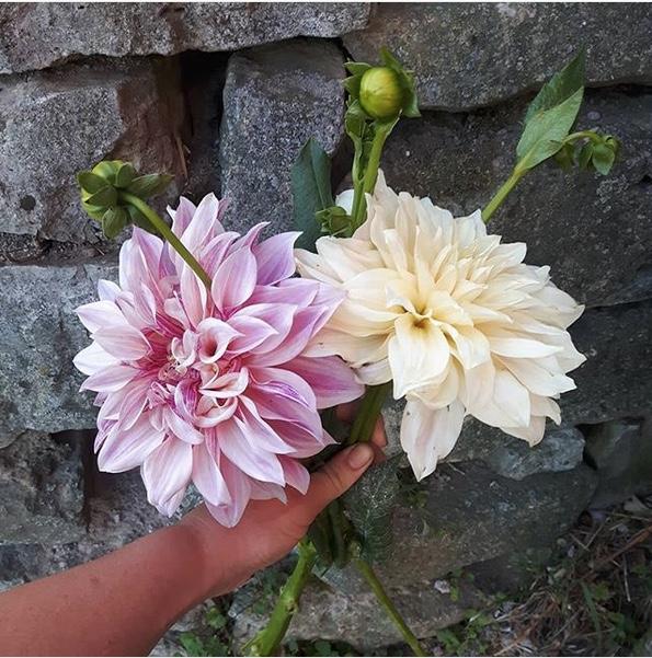 Instagram post by La Primavera Farms