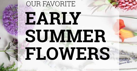 Our Favorite Early Summer Flowers [2018]